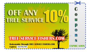 Tree Service Coupon Fishers Indiana