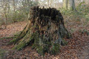 Tree Stump Removal 317-537-9770
