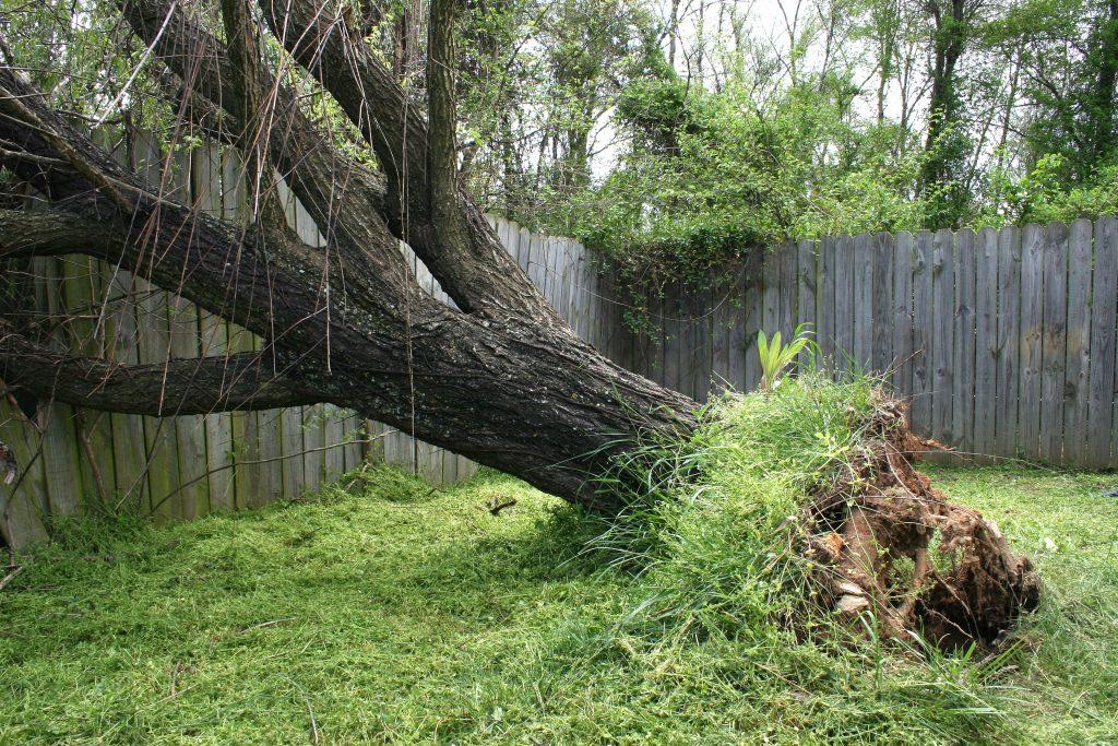 Fishers Tree Service 317-537-9770