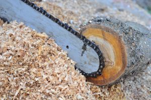 Stump Grinding 317-537-9770