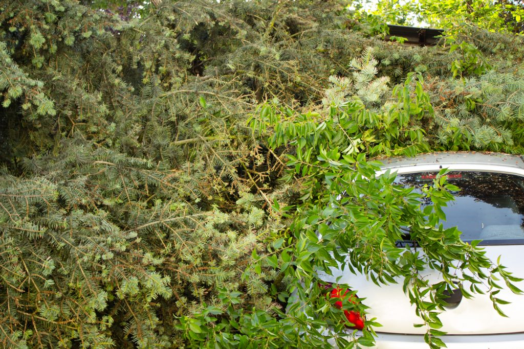 Fishers Tree Removal 317-537-9770