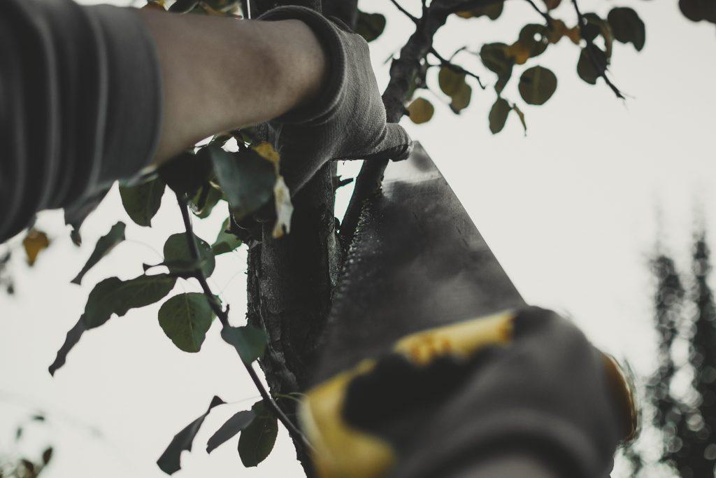 Fishers Tree Service Company 317-537-9770