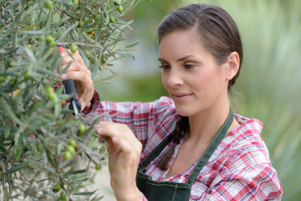 Tree Pruning 317-537-9770