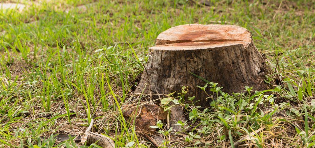 Fishers Tree Stump Removal
