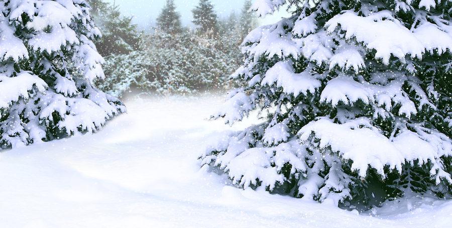 Winter Tree Service 317-537-9770