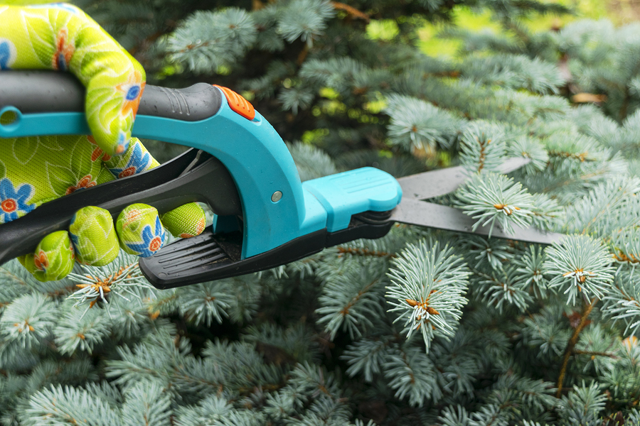 Fishers Tree Pruning 317-537-9770
