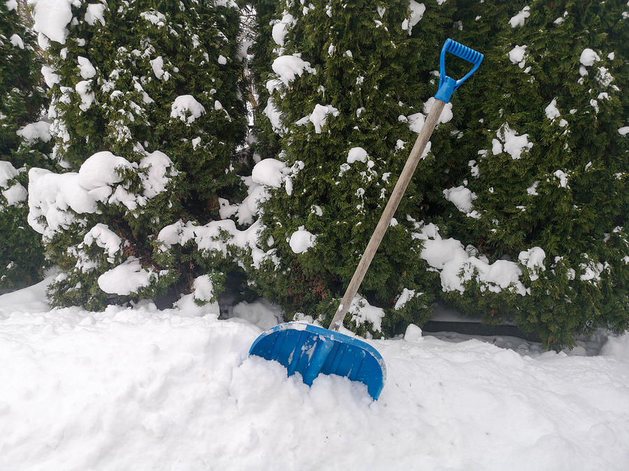 Winter Tree Service in Fishers, Indiana